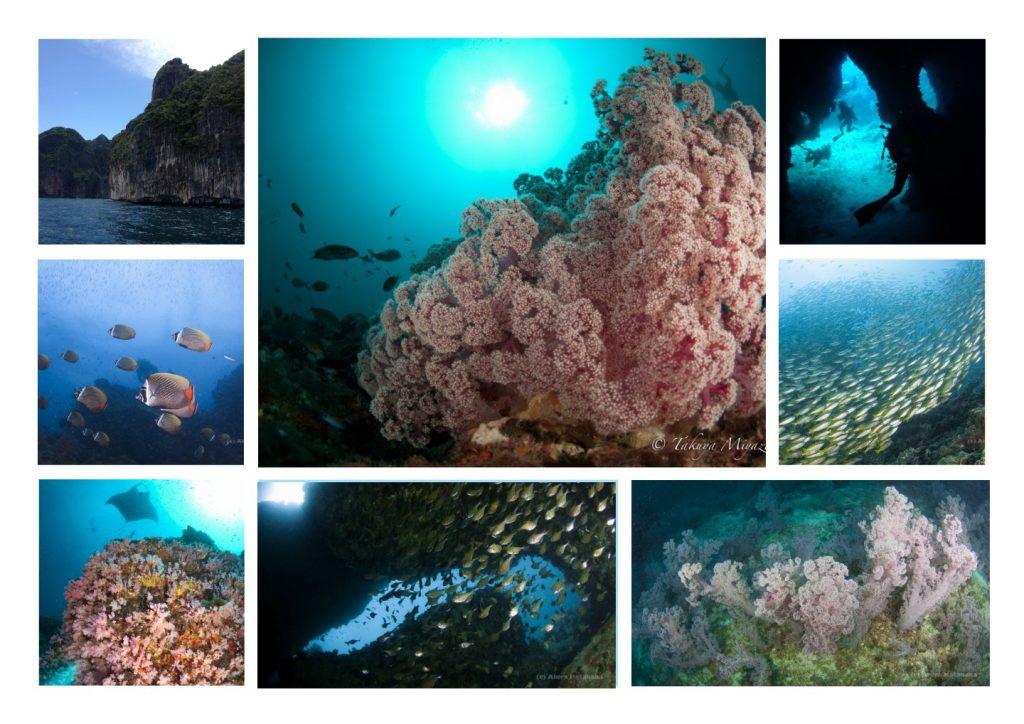 南アンダマン海はソフトコーラルと地形が魅力!プーケット・カタダイビングサービス